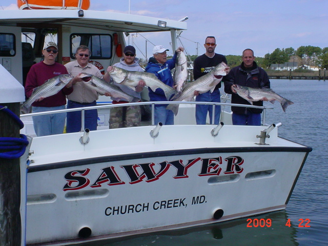 Maryland Rockfish, Striped Bass, Stripers!