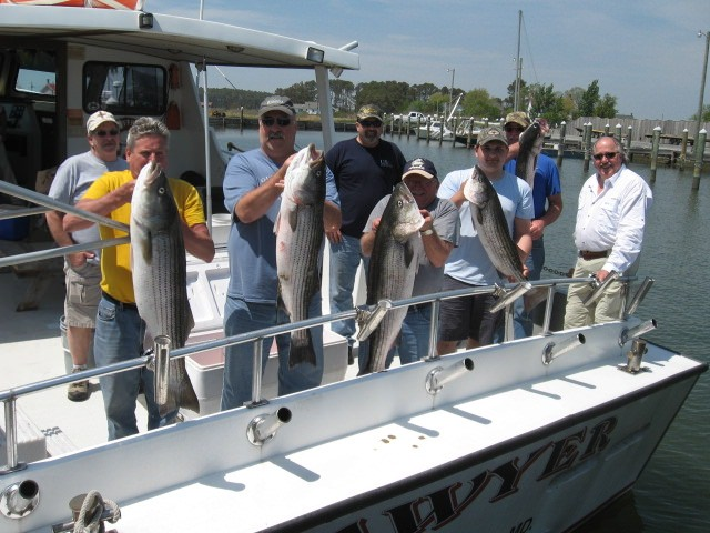 Maryland fishing report chesapeake bay fishing report for for Striper fishing chesapeake bay